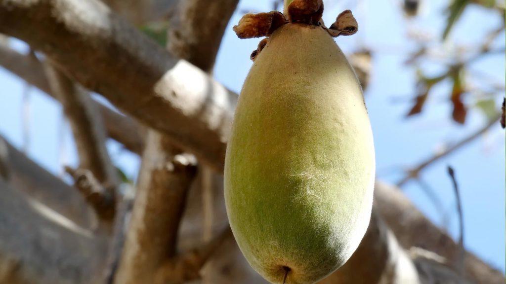 superfoods-baobab-1024x576