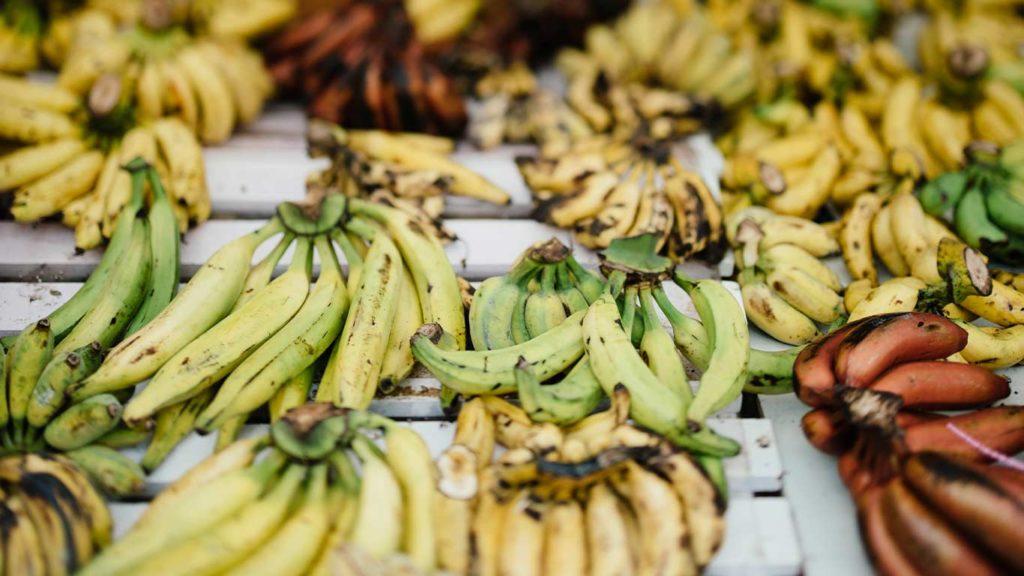 vegan-ernährung-gesund-bananen-1024x576