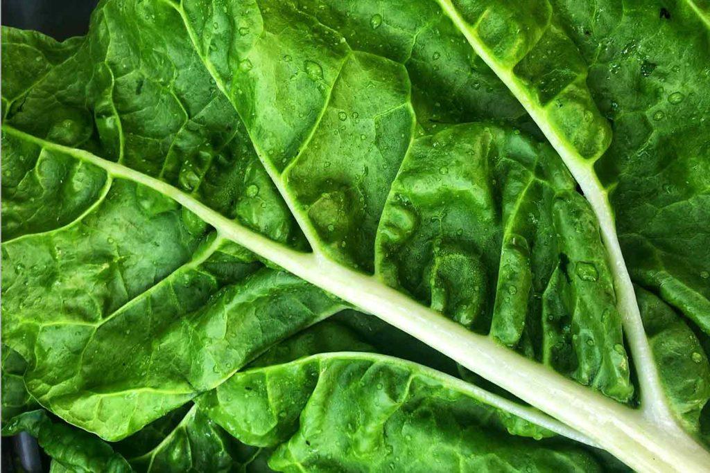 vegan-abnehmen-dauer-grünes-blattgemüse-1024x683