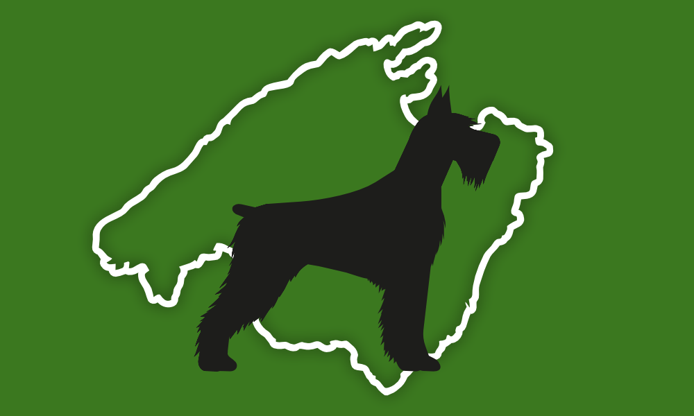 Hund nach Mallorca