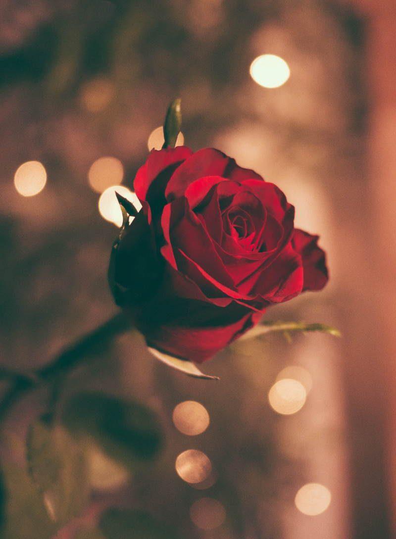 Spruch 1 für die Romantischen