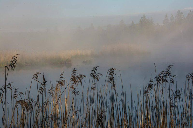 Bild: Das Hochmoor im Allgäu